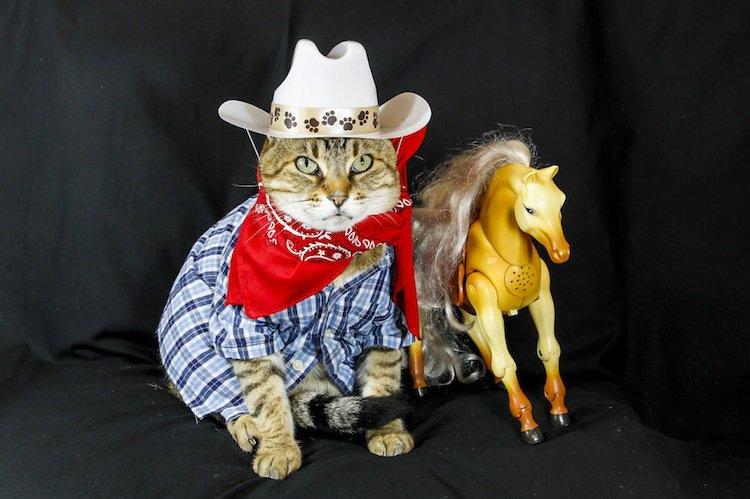 cat-billy