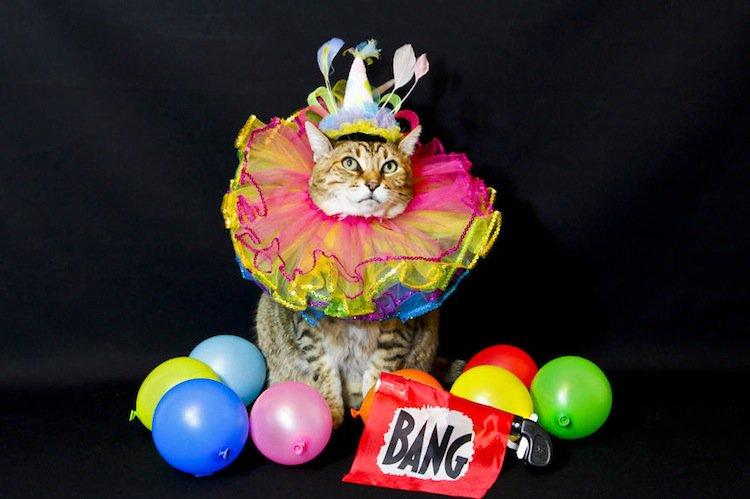 cat-circus
