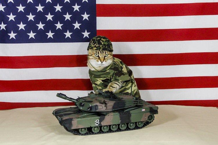 cat-combat