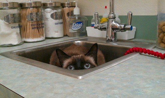 cat hiding sink