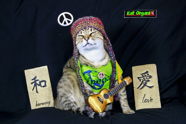 cat-peace