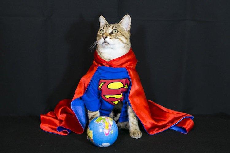 cat-super