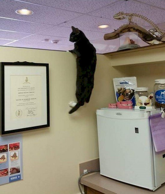 16 Funny Photos Of Cats Who Think They Re Hiding From The Vet