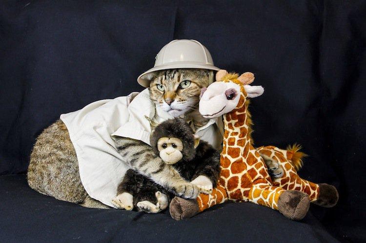 cat-wild