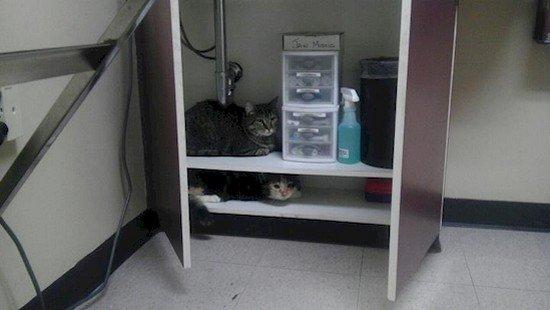 cats hiding cupboard