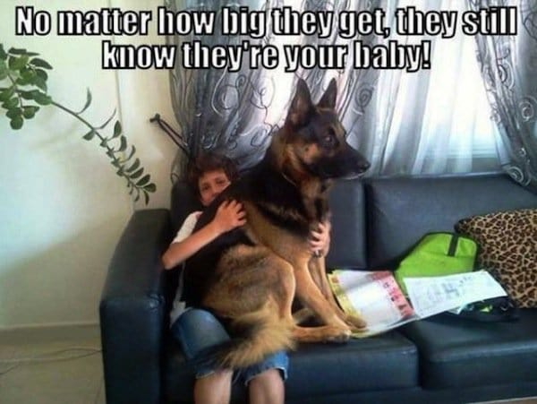 dog-baby