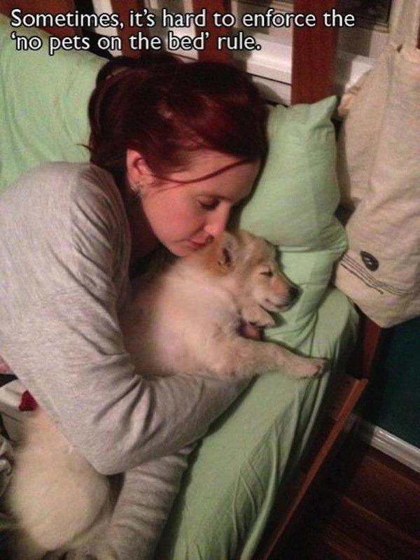 dog-bed-three