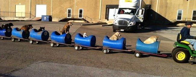 dog-train-side