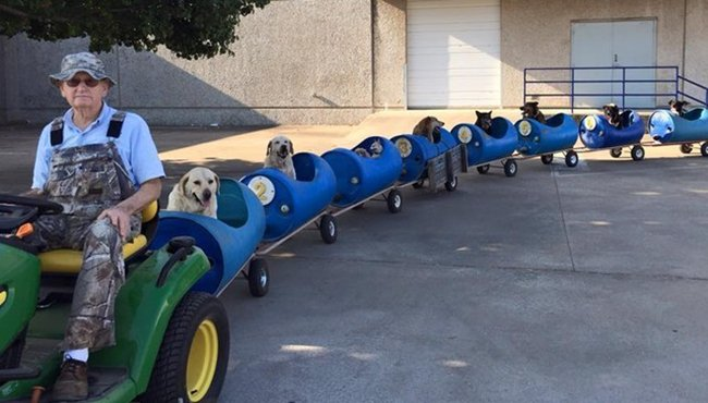 dog-train-top