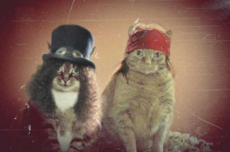 gnr cats