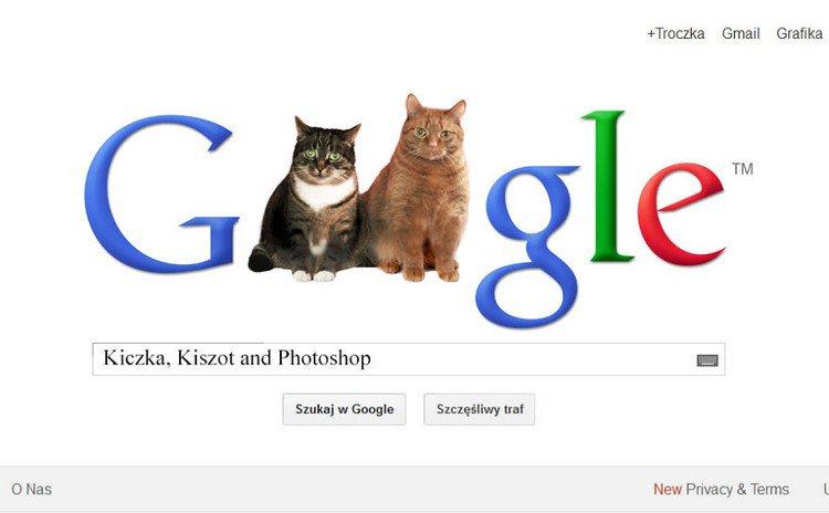 google cats
