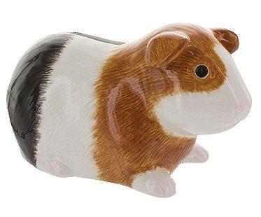 guinea piggy bank pig