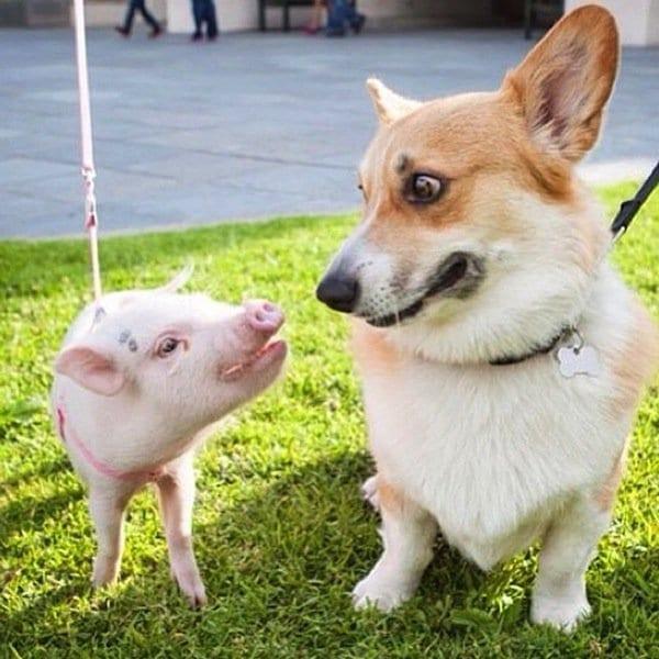 hamlet-dog