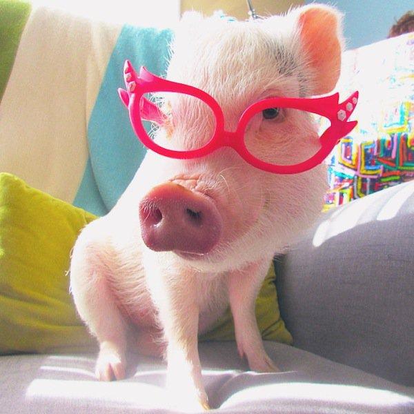 hamlet-glasses