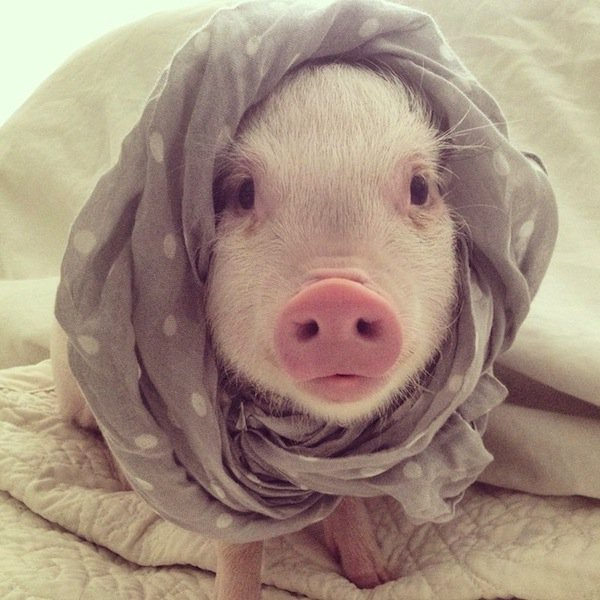 hamlet-scarf