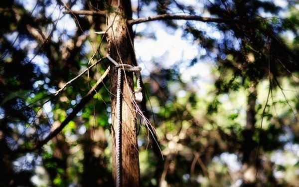 haunted-places-aokigahara-forest