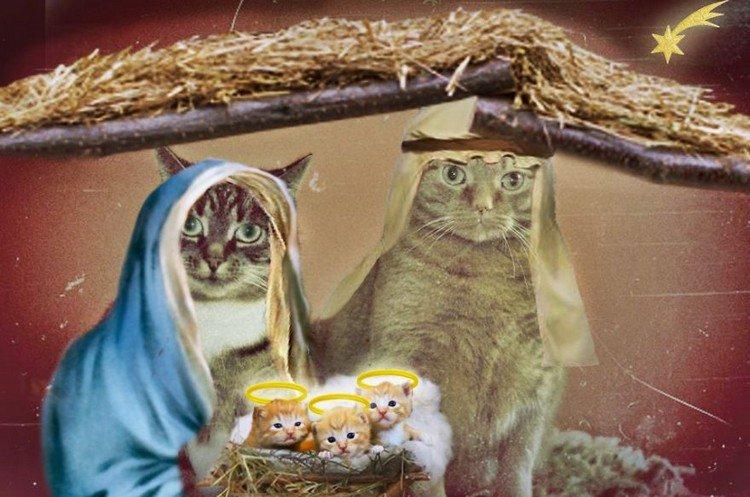 holy family cats