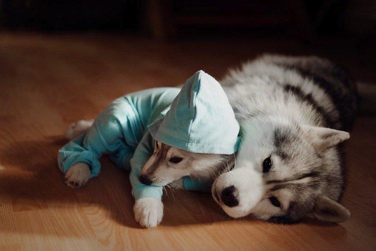 husky-first