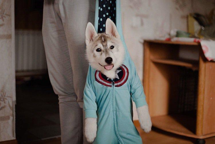 husky-hang