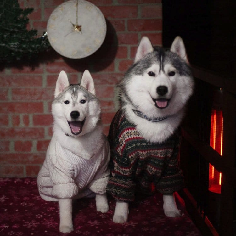 husky-jersey