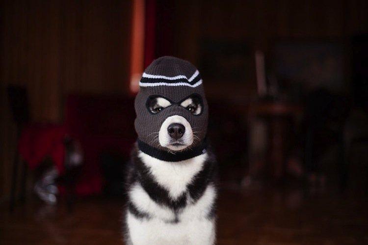 husky-mask