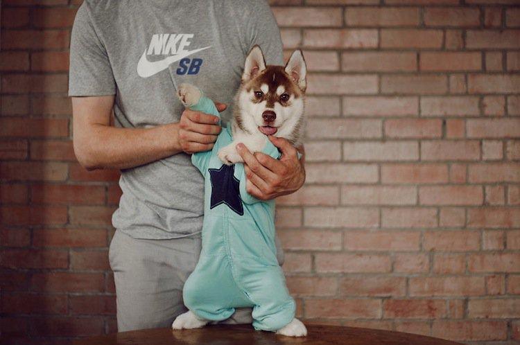 husky-suit