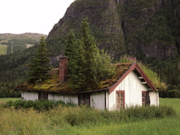 incredible-norway-photos-tree-roof
