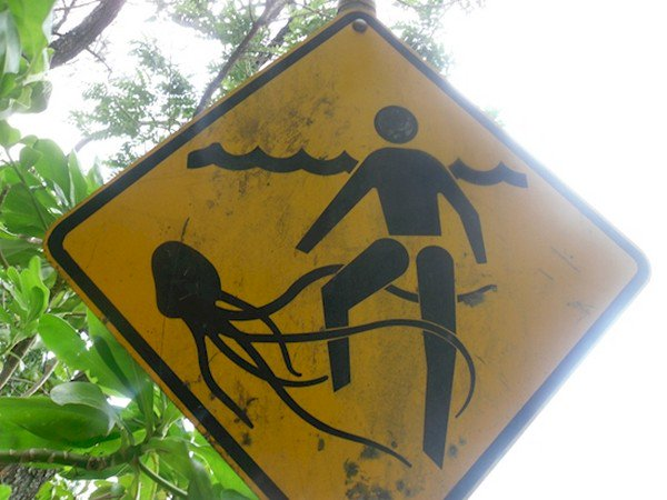 jellyfish man sign