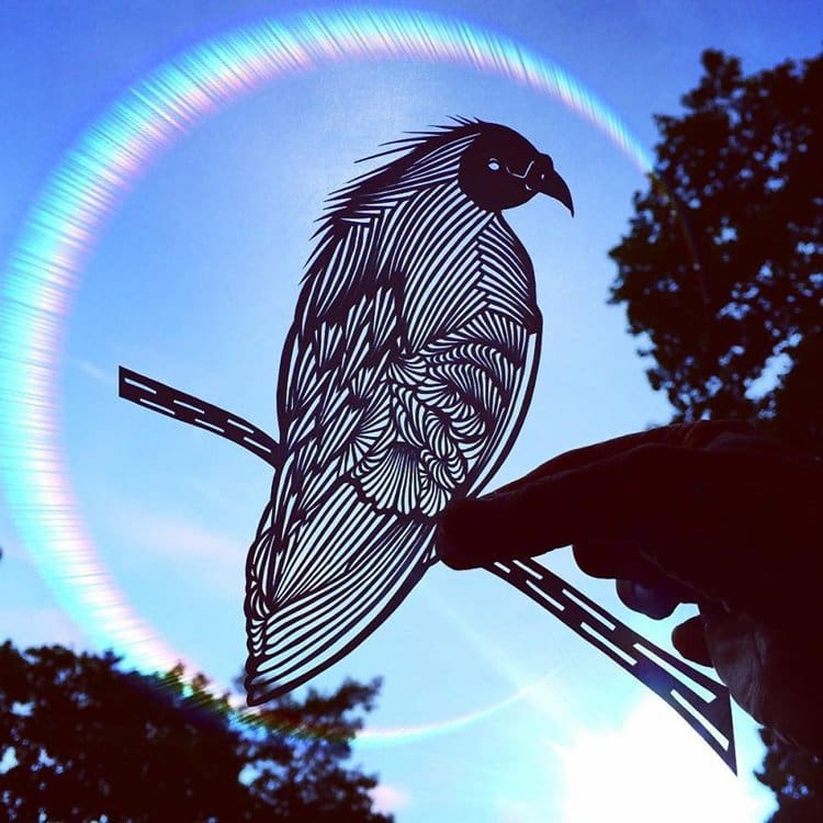jo-chorny-pigeon