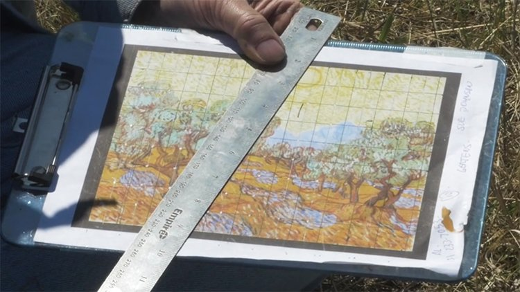 land-art-painting-field-van-gogh-olive-trees-stan-herd-mapping