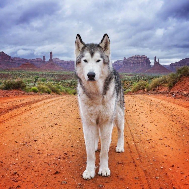 loki-dog