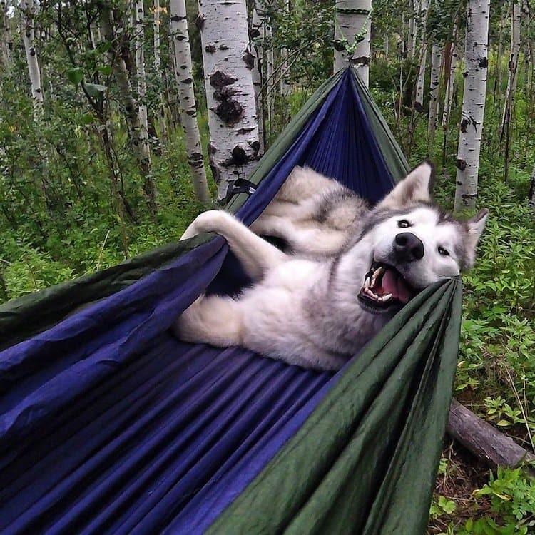 loki-hammock