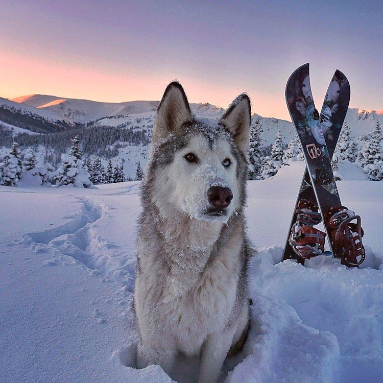 loki-snow