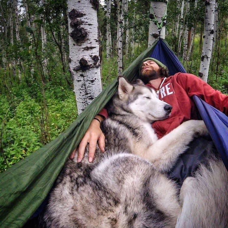 loki-wolf