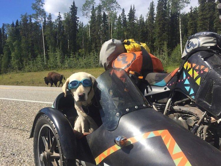 motorbike-dog