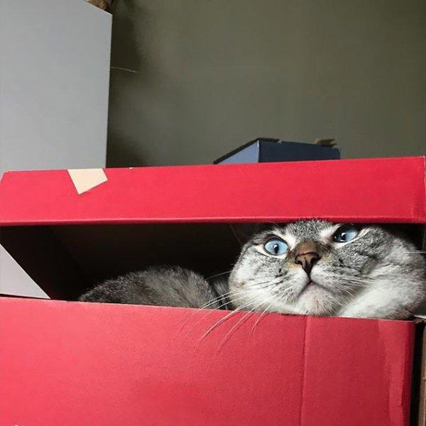 nala-box-two