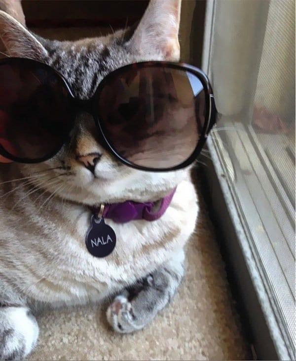nala-glasses