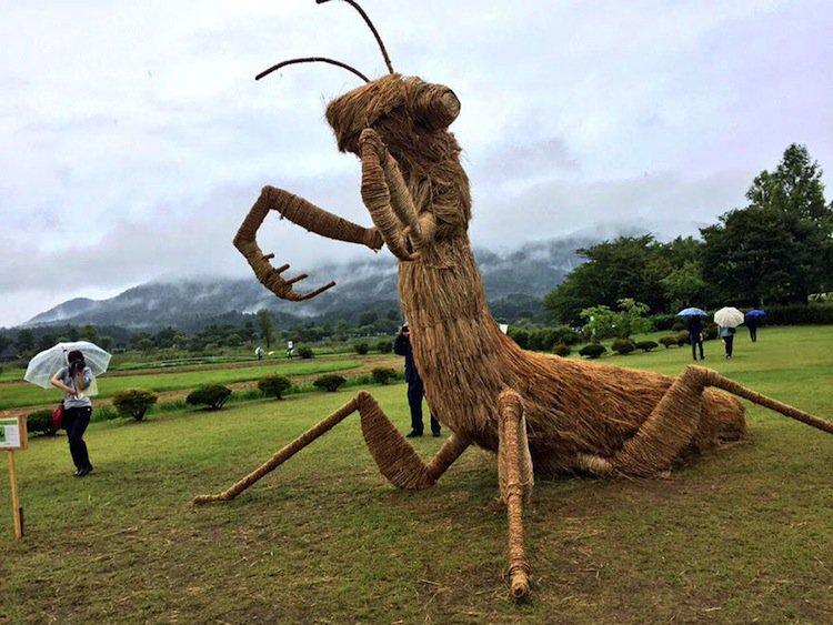 niigata-insect
