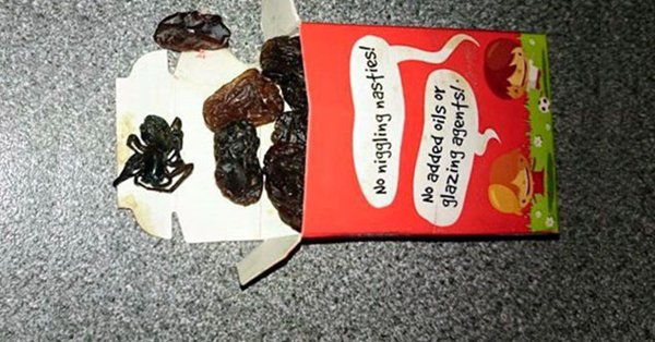 nope-raisins