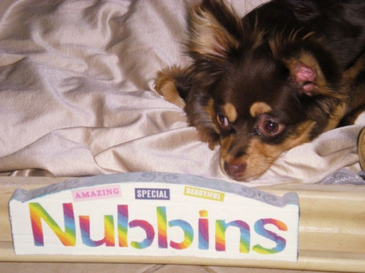 nubbins and sign