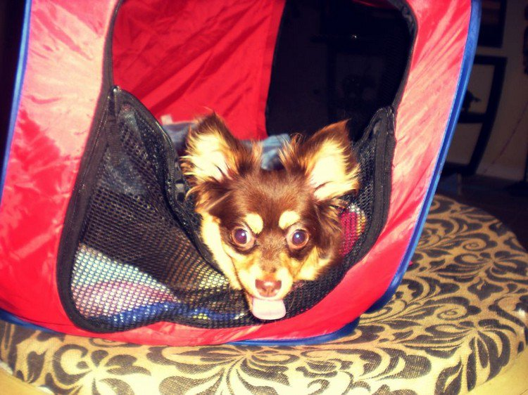 nubbins in tent
