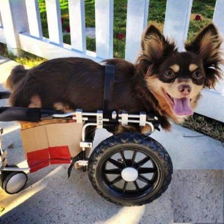 nubbins wheelchair