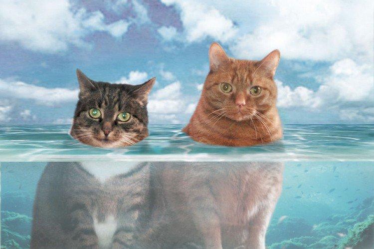 ocean cats