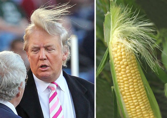 sim-corn
