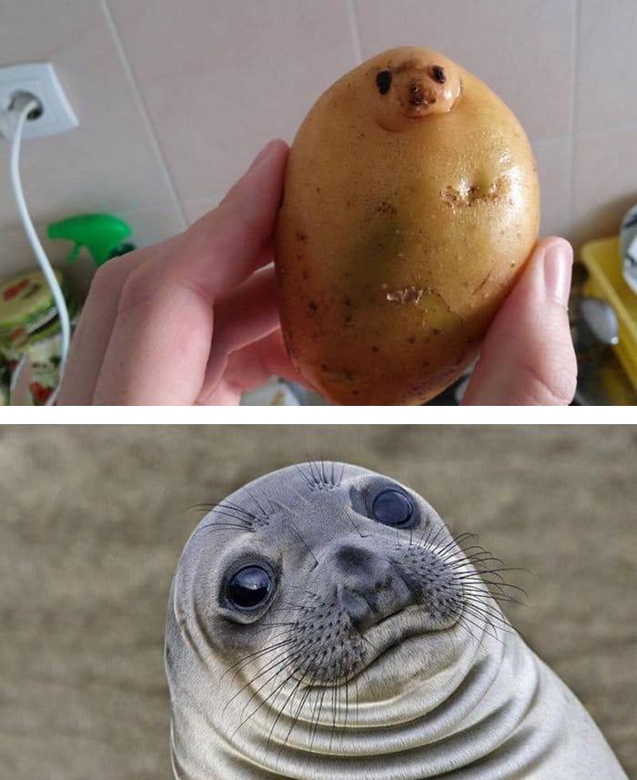 sim-potato