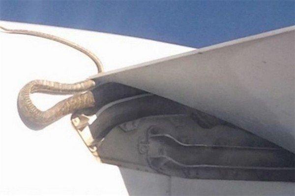 snake plane
