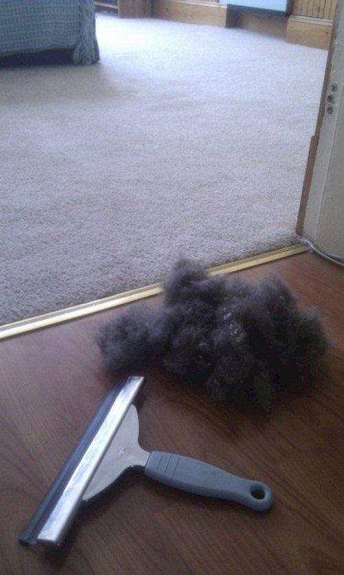squeegee hair
