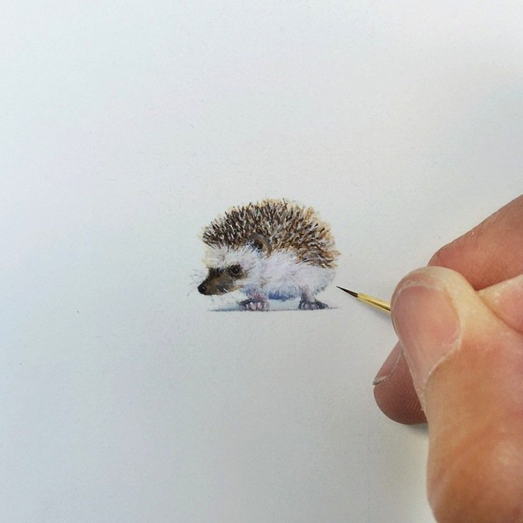 tiny-hedgehog