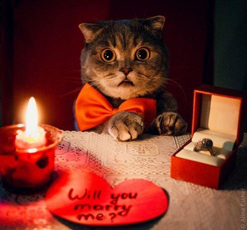 trashy-proposals-cat