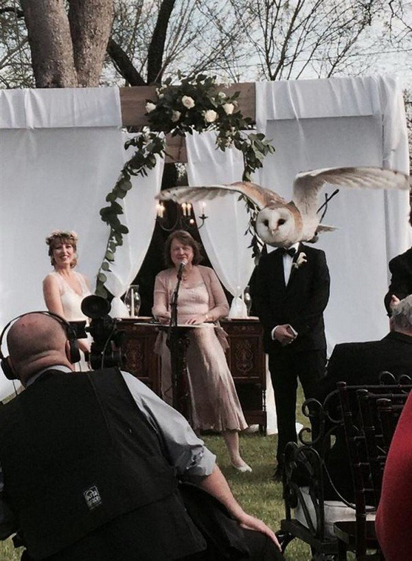 wedding owl man face